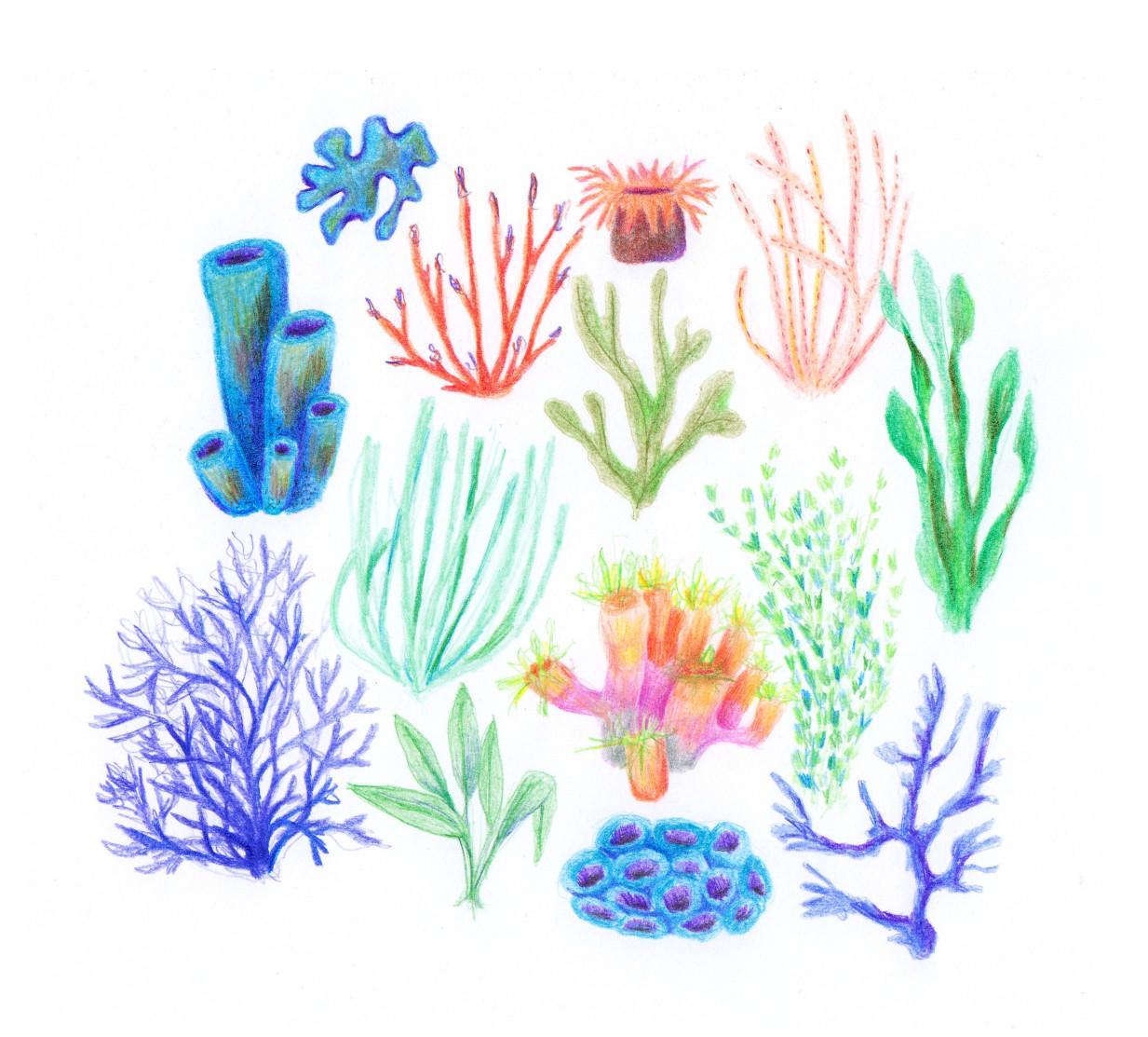 corals_blog.jpg