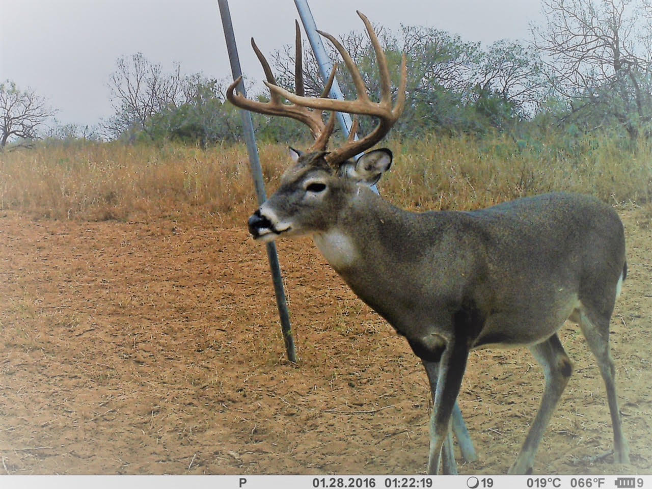 I am off to the ranch next week for a couple weeks before Christmas. We are starting to see the mature bucks moving and the weather forecast looks good. I will keep posting on FB and will send Out a couple updates when I can. Best, Brian  - 12/1/17