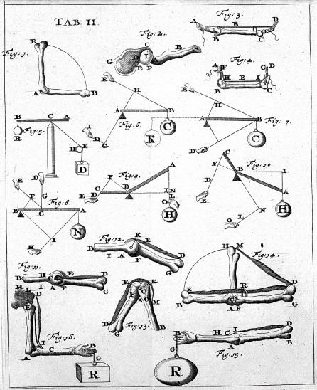 An early treatise on biomechanics. Giovanni Alfonso Borelli, 1680. De Motu Animalium.