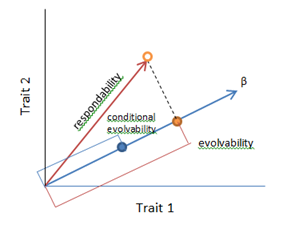 Measures of evolvability as vectors between two quantitative traits in response to directional selection (β) on those two traits. Adapted from Hansen and Houle (2008).