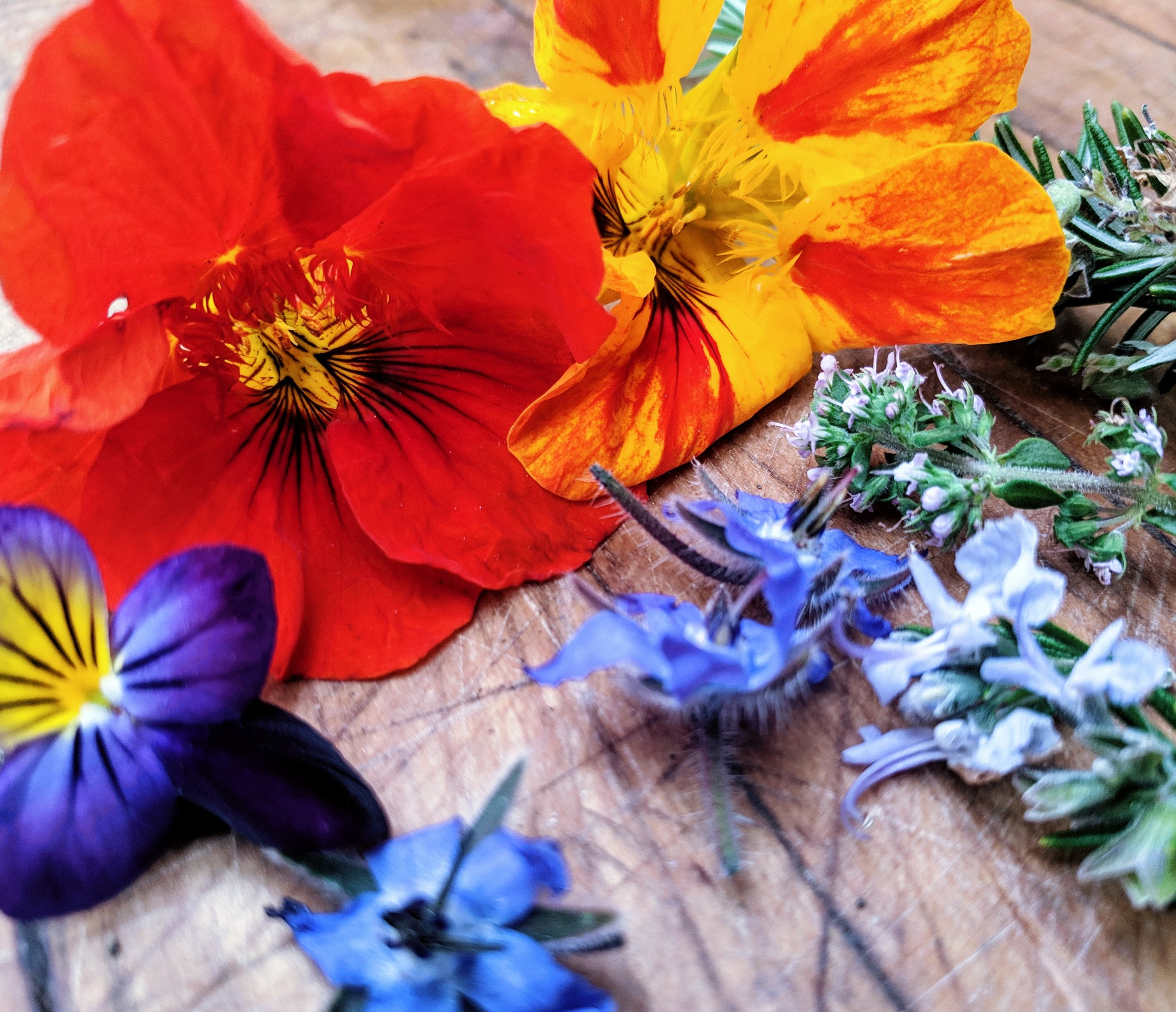 a sampler of edible flowers from our garden