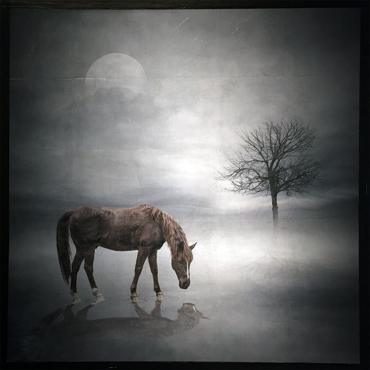 Equinemity gridded mixed media photograph on panel 30 x 30 inches GNO 147G