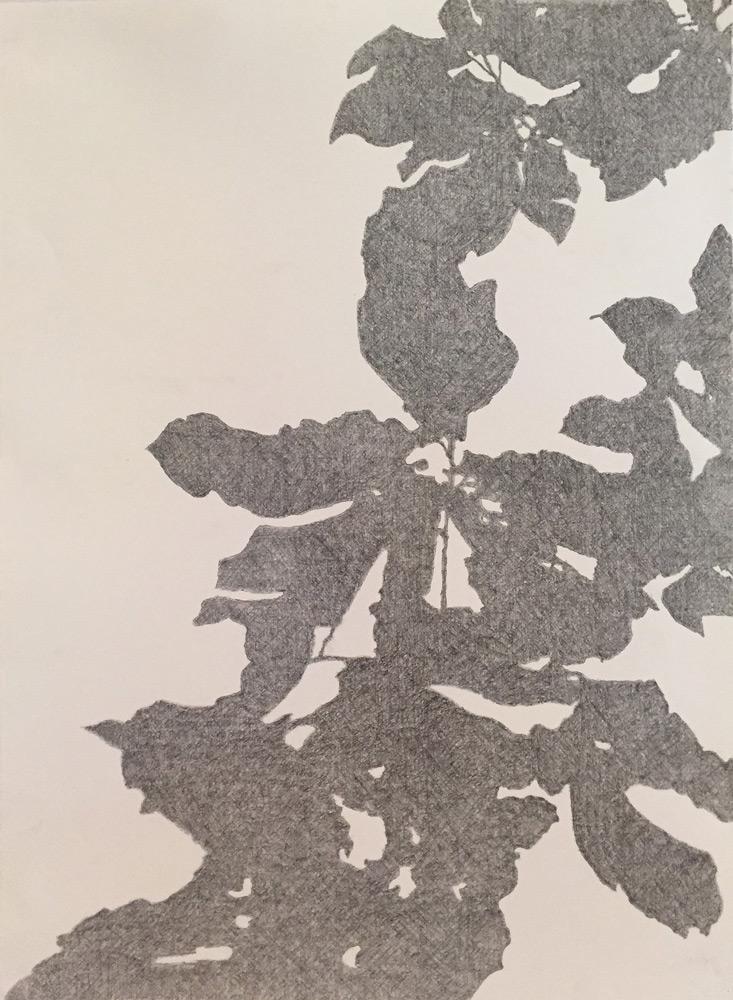 """Lynn Montagne   Tripetala 2 , graphite on paper, 22""""x30"""""""