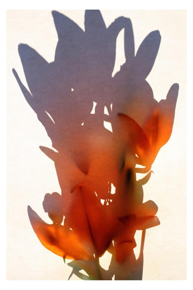 Richard Solomon   Bouquet  archival pigment print 20x30