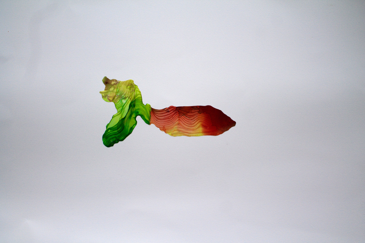 Susan Knippenberg Specimen (2) liquid acrylic 18 x 24 inches SKN 003G.jpg