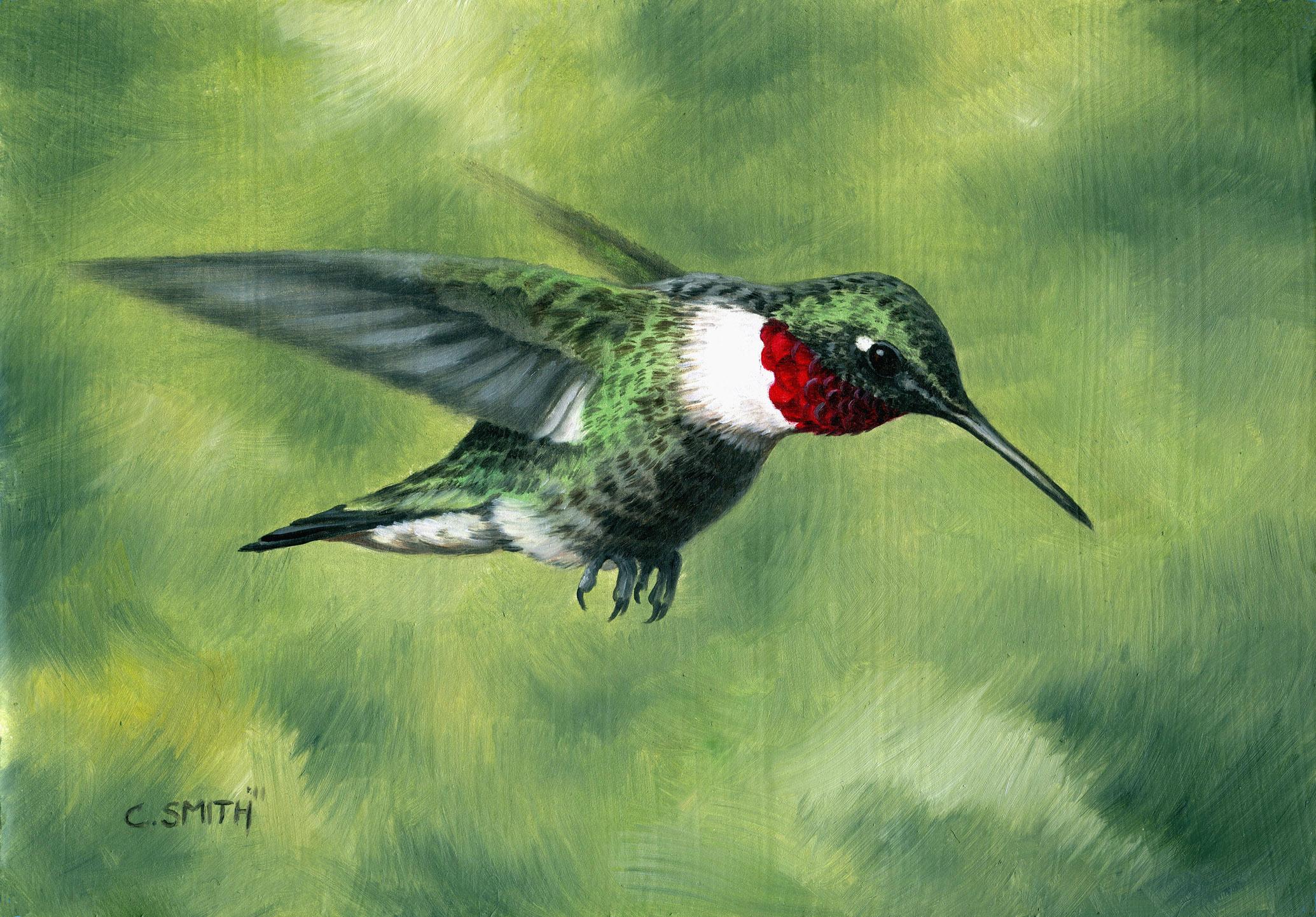 A Hummingbird Study
