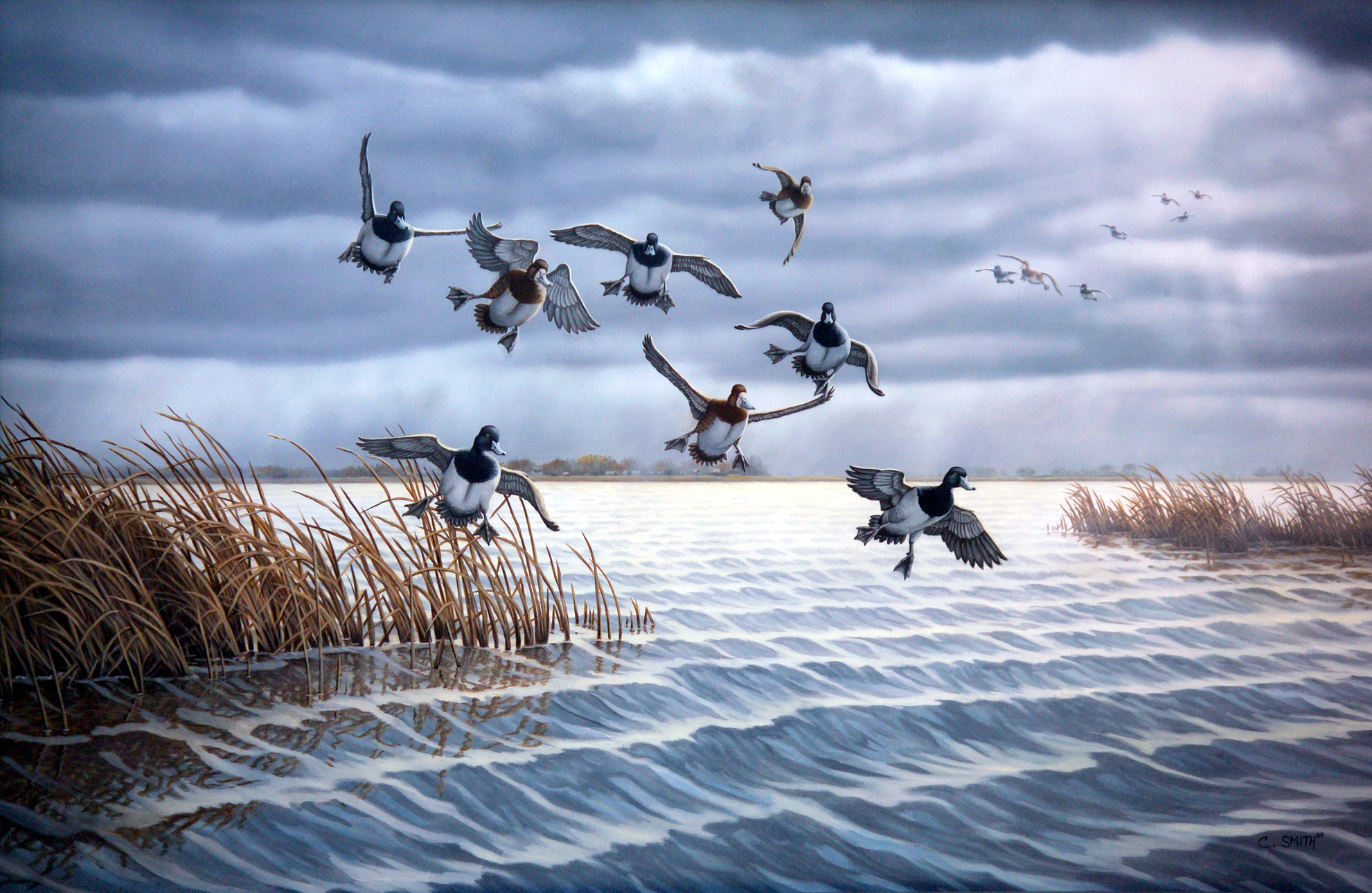 Morning Squall - Bluebills