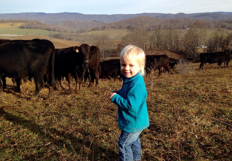 hallie and cows.jpg
