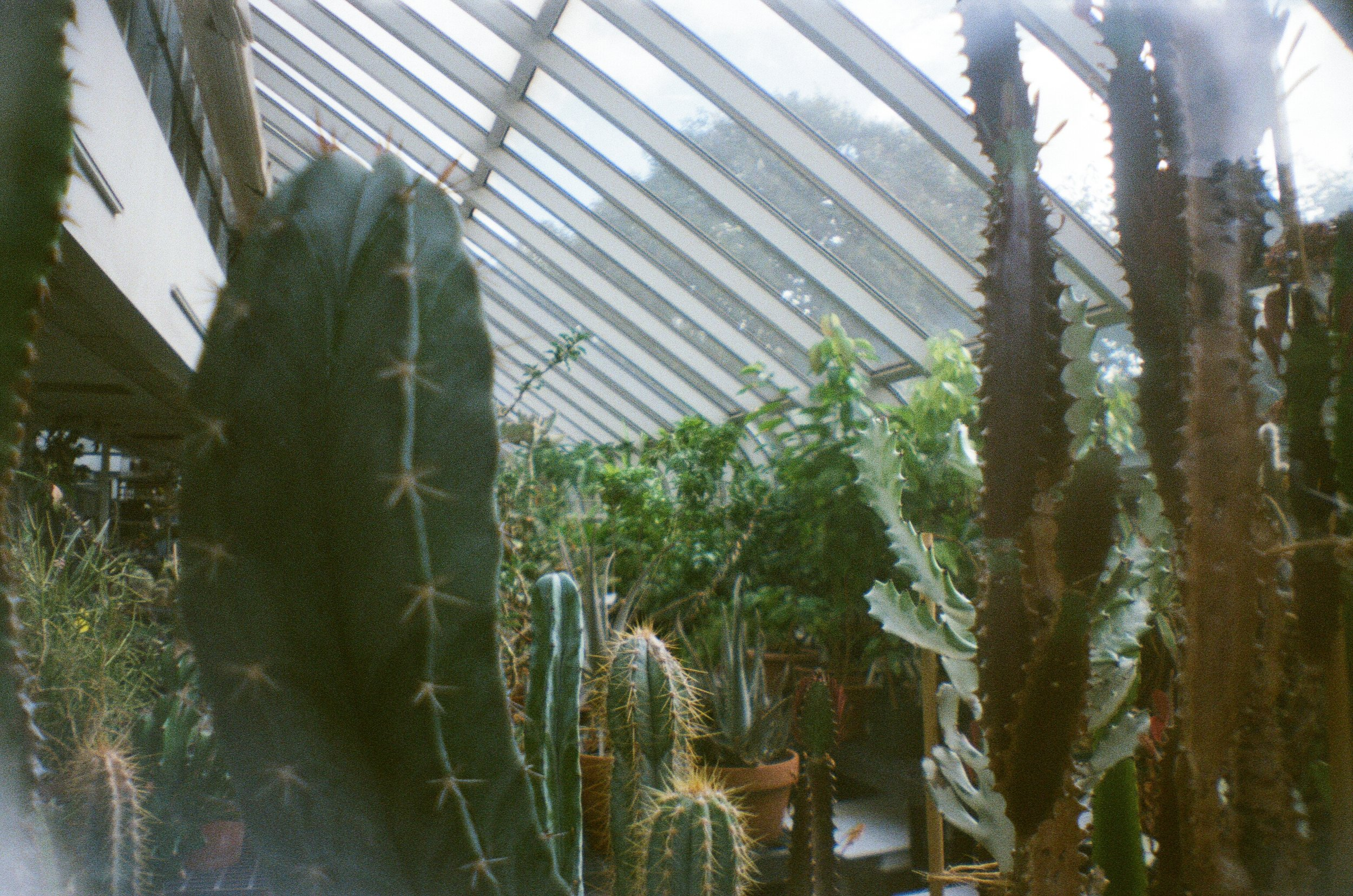 Brooklyn Botanic Garden, NYC, USA. This was taken with film, I was still learning about what the best lighting suited this little toy camera.