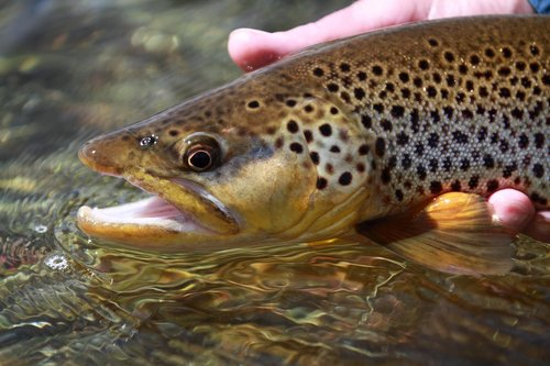 Find reports and flow data for the Beaverhead, Big Hole, Ruby, Madison, Clark Canyon Reservoir, and other area waters.
