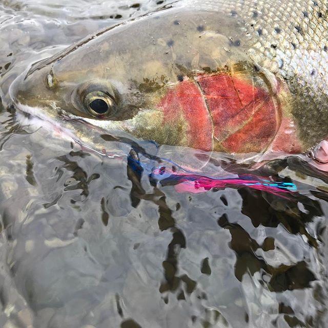 Nice fish Tyler! 👌🏻 #flyfishing #fishing #winteractivity #OPENYOUREYESTYLER