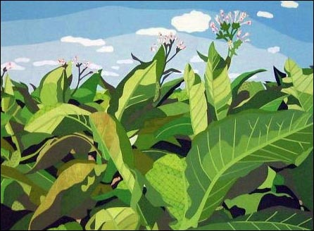 EvaKing-03-TobaccoField-Bloom.jpg