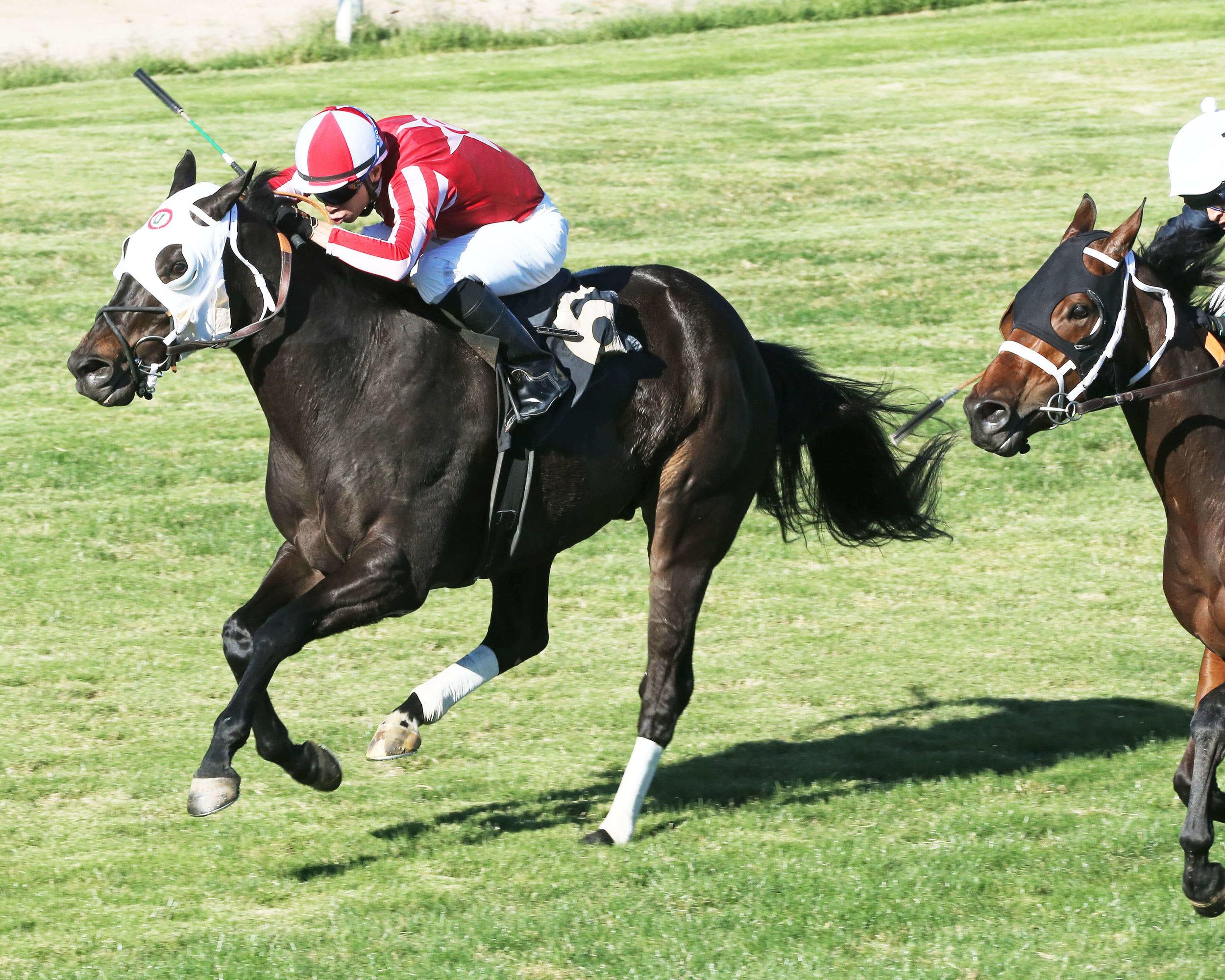 Twelve Tribes - Jeff & Jack Coady, Sr Stakes - 11-08-14 - R05 - TUP - Inside Finish (1).jpg