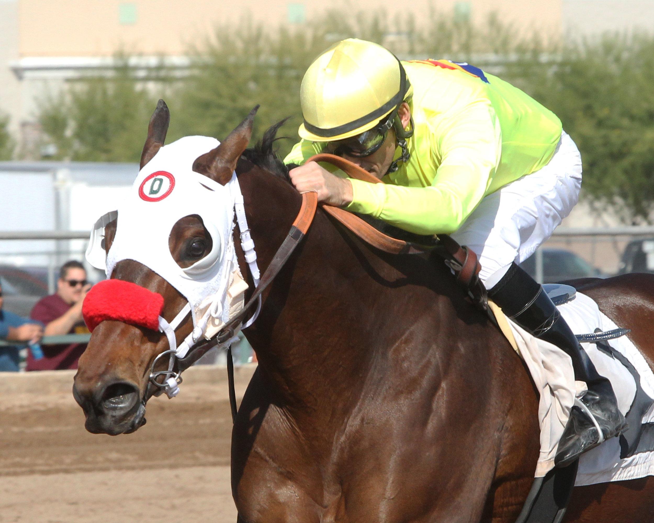 Omar - Caballos Del Sol Stakes - 11-15-14 - R03 - TUP - Inside Finish (2).jpg