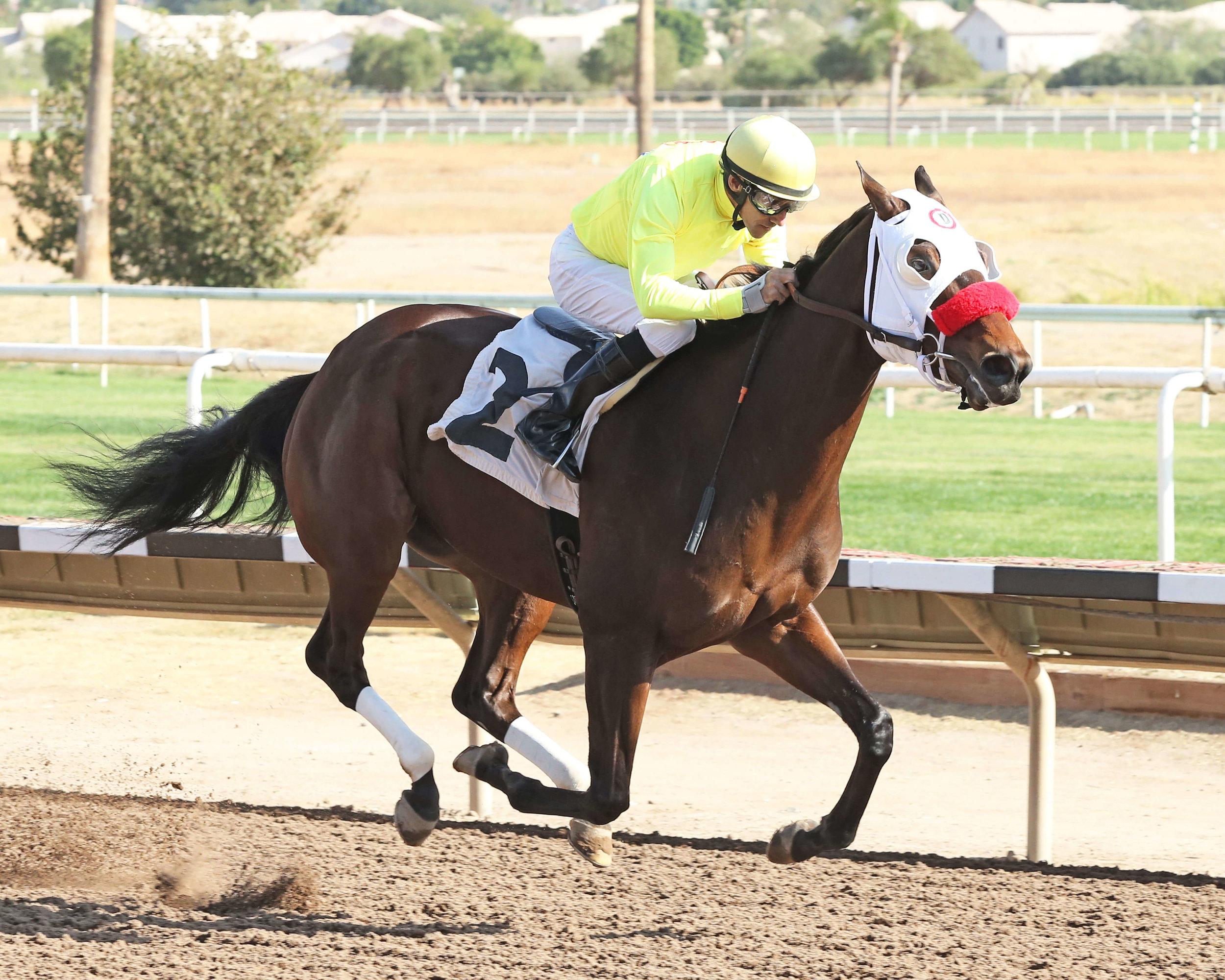 Omar - Caballos Del Sol Stakes - 11-15-14 - R03 - TUP - Finish (1).jpg
