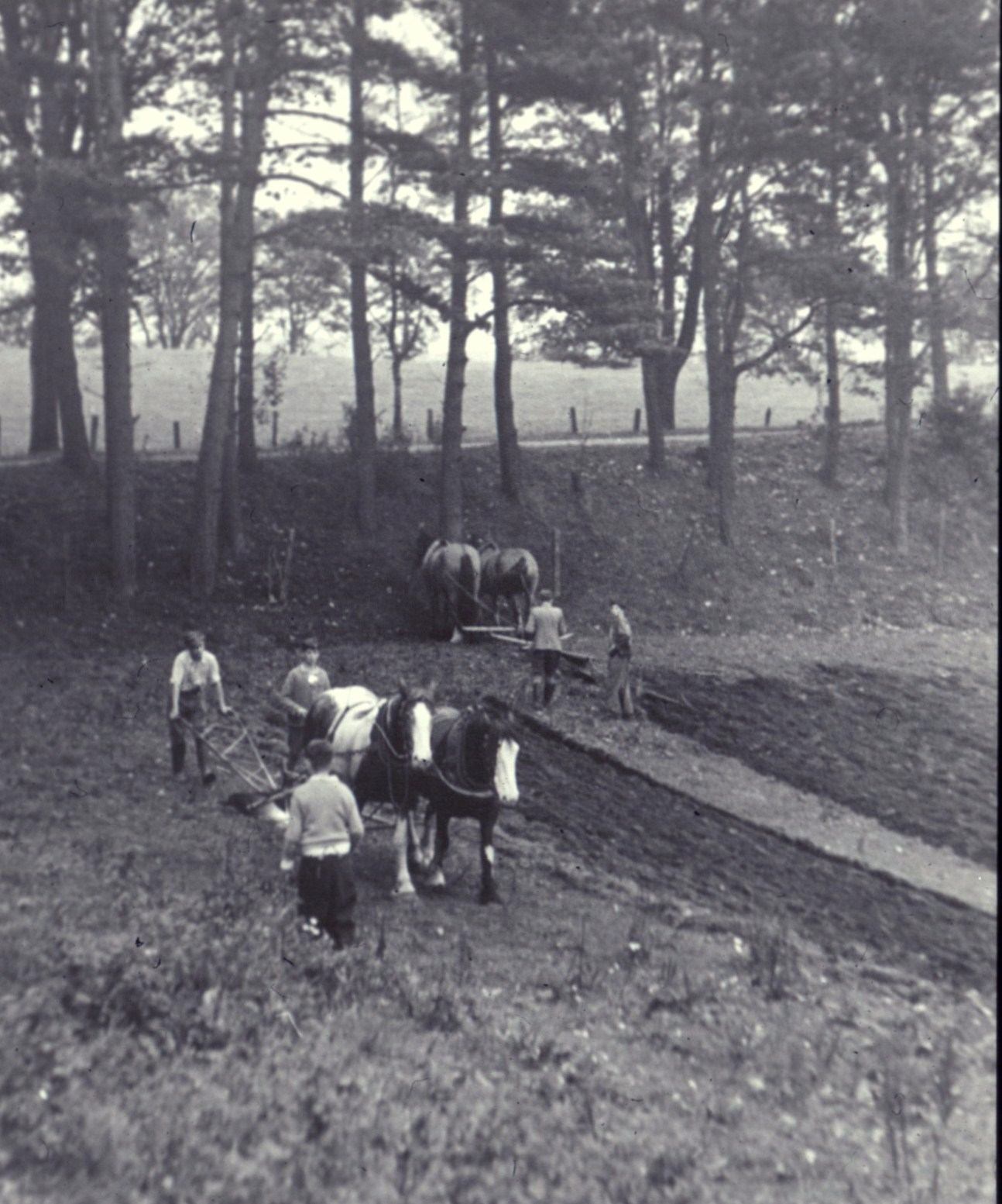 ND Farm - Ploughing with Horses.jpg