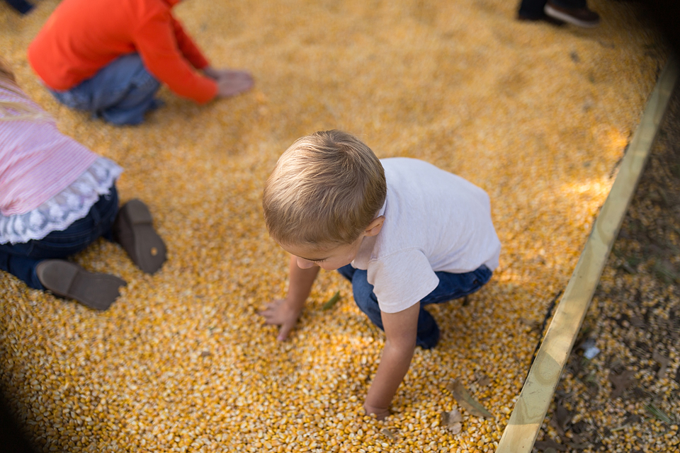 college station family photographer farm patch corn pit