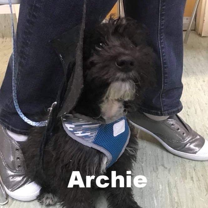 PPS - Archie.jpg