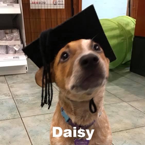 PPS - Daisy.jpg