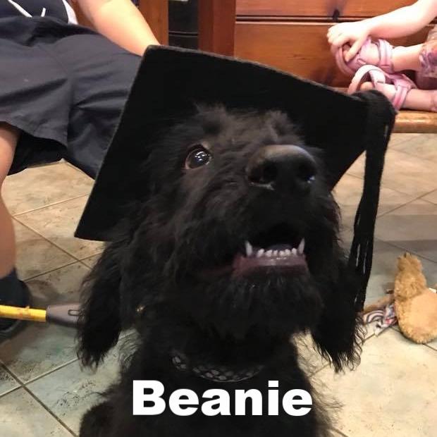 PPS - Beanie.jpg