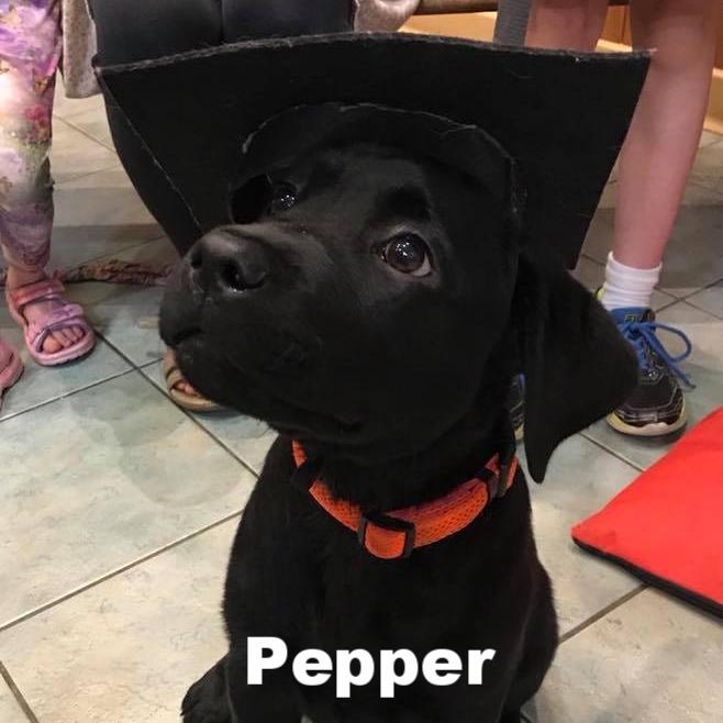PPS - Pepper.jpg
