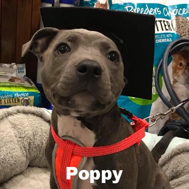 PPS - Poppy.jpg