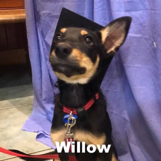PPS - Willow.jpg