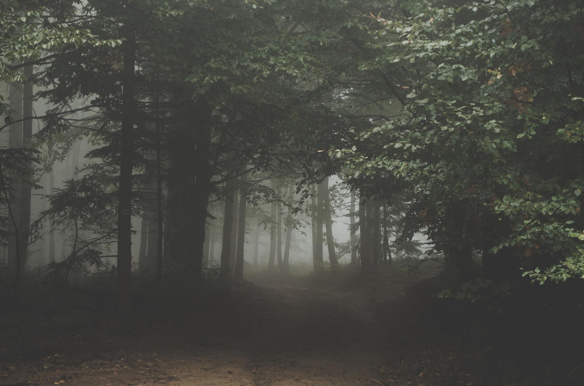forest-1031022_1920.jpg