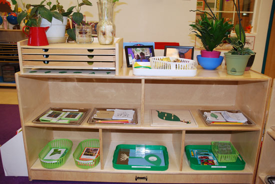 A TYPICAL BOTANY SHELF IN A MONTESSORI ENVIRONMENT