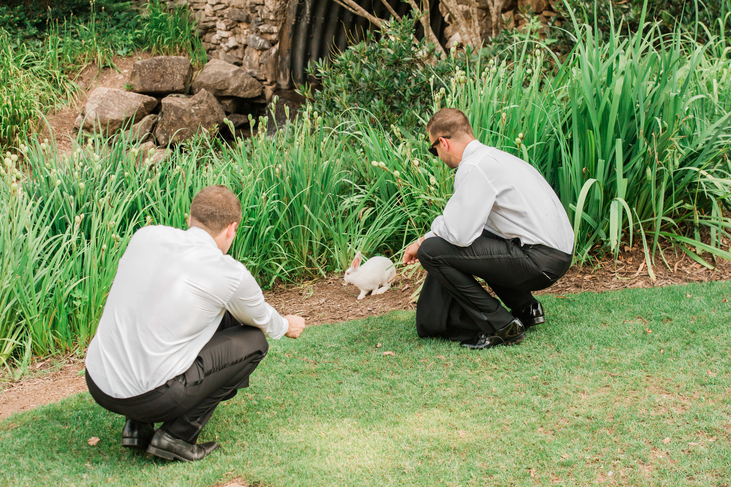 That time the groomsmen got distracted by a bunny....