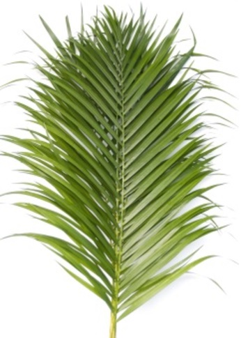 YELLOW PALM LEAF