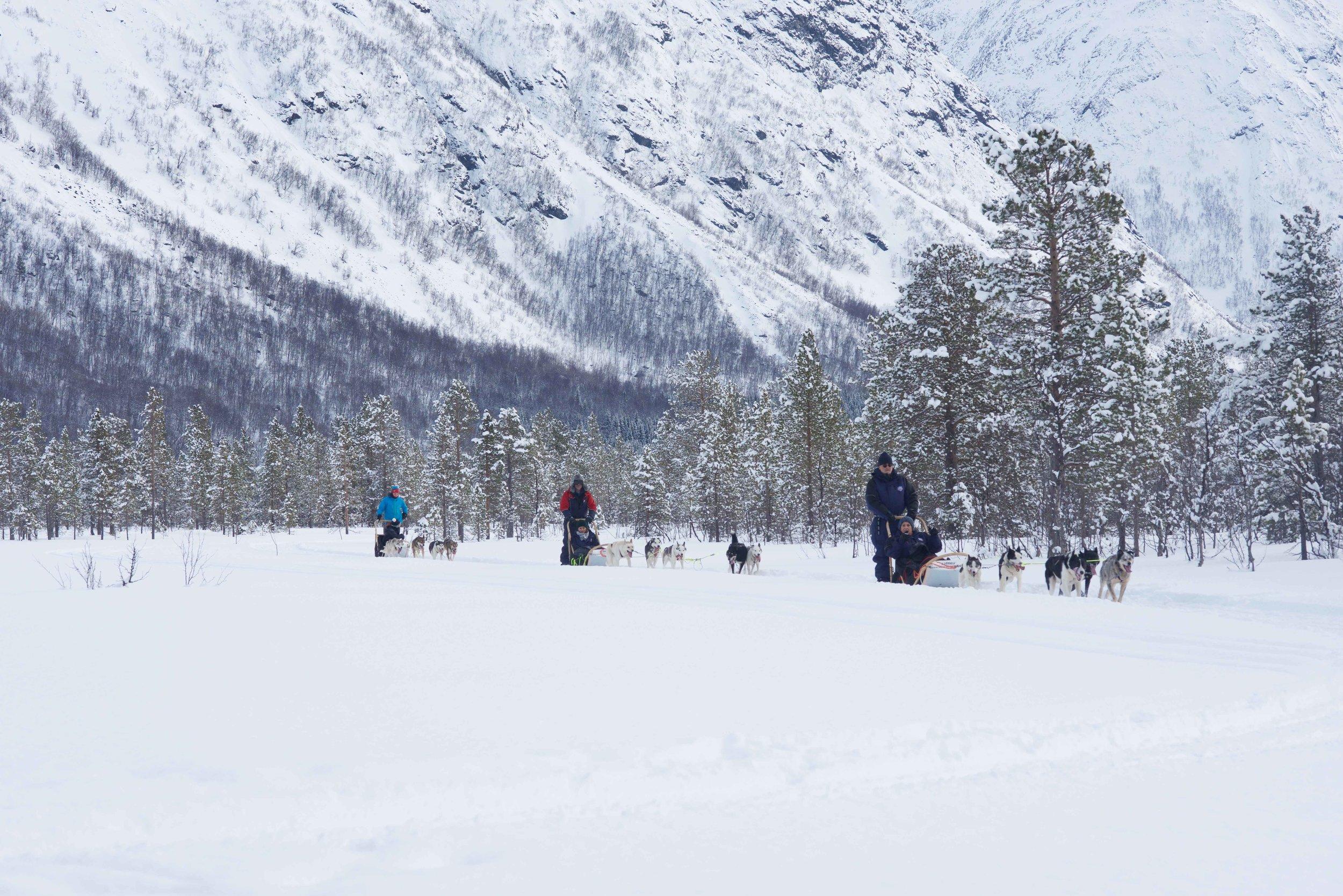 Dog sledging, organized by Lyngen Lodge, Arctic Circle, Norway. Image@thingstodot.com