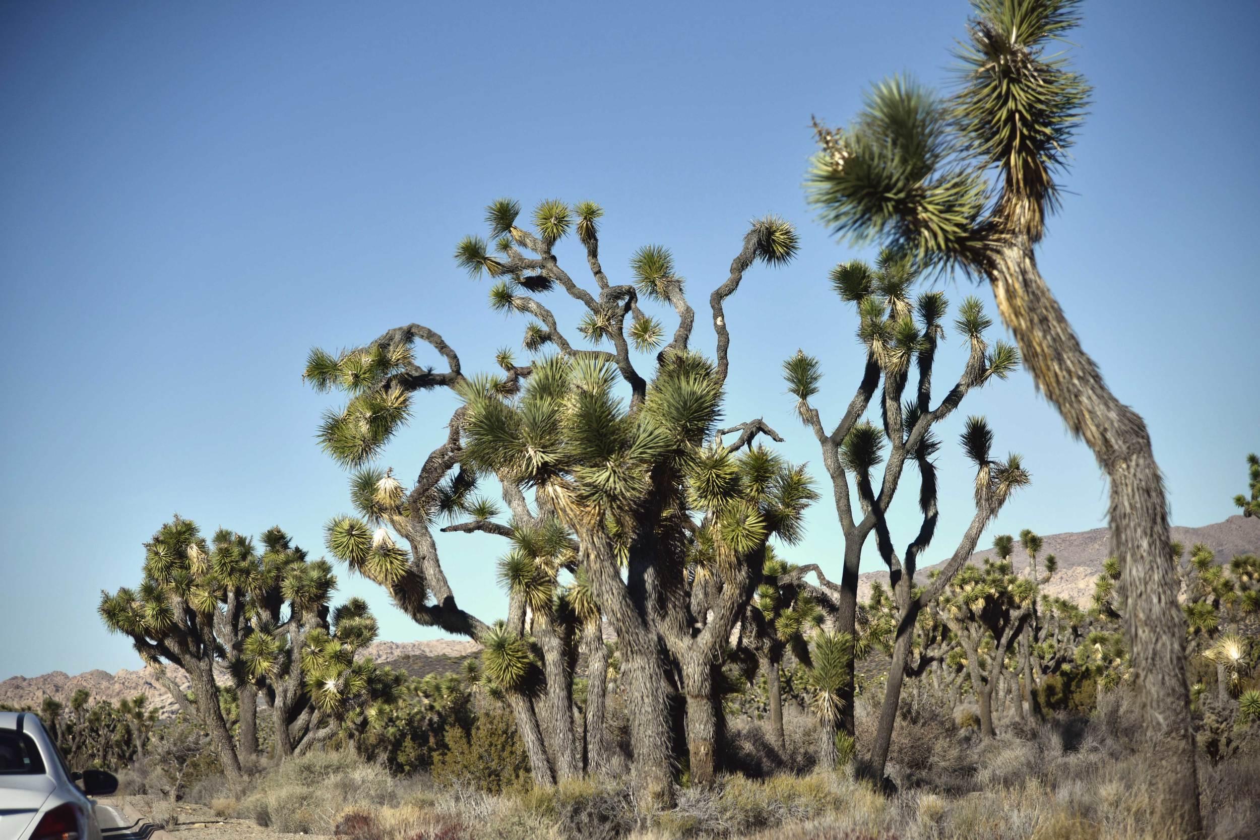 Joshua Tree National Park, Southern California, USA. Image©thingstodot.com