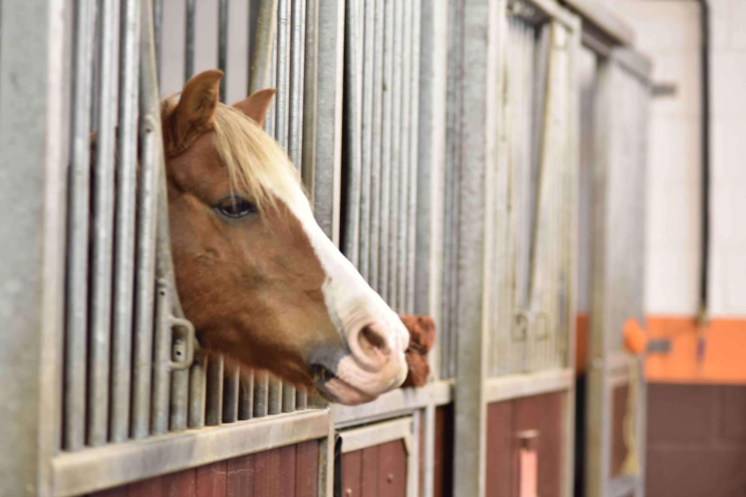 Horse Stables, Coworth Park Hotel & Spa, Ascot, UK. Photo: Nina Shaw. Image©thingstodot.com