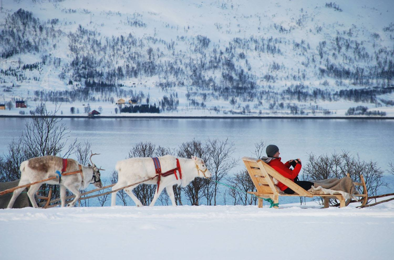 Reindeer Sledging, Tromso, Norway. Photo: Youssef Amaaou. Image©Youssef Amaaou