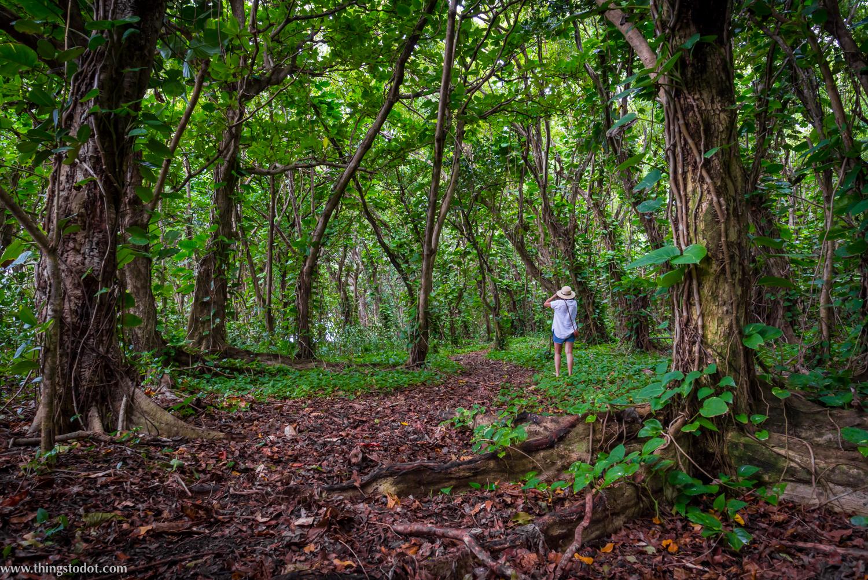 Ke'e beach, forest, Kauai, Hawaii. Photo: Gerald Prickett. Image©www.thingstodot.com
