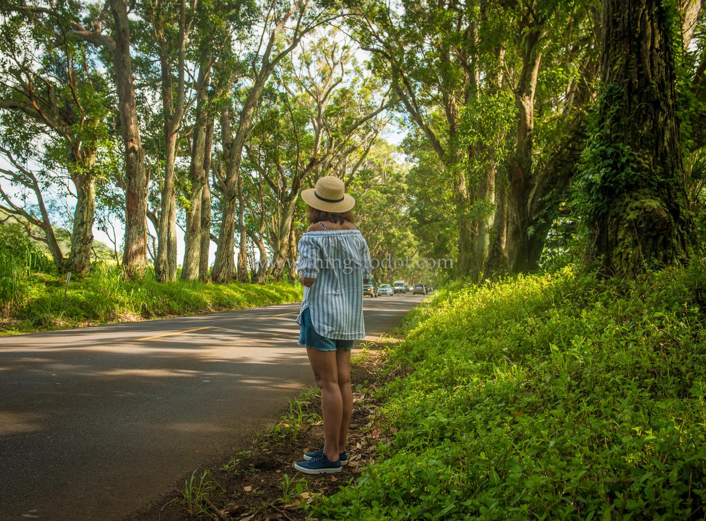 Tree Tunnel, Kauai, Hawaii.