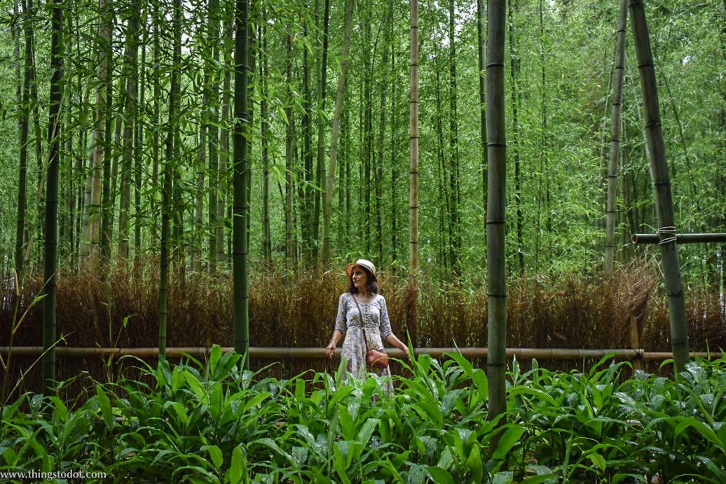 Arashiyama Bamboo Grove, UNESCO World Heritage Site,Kyoto, Japan. Image©www.thingstodot.com