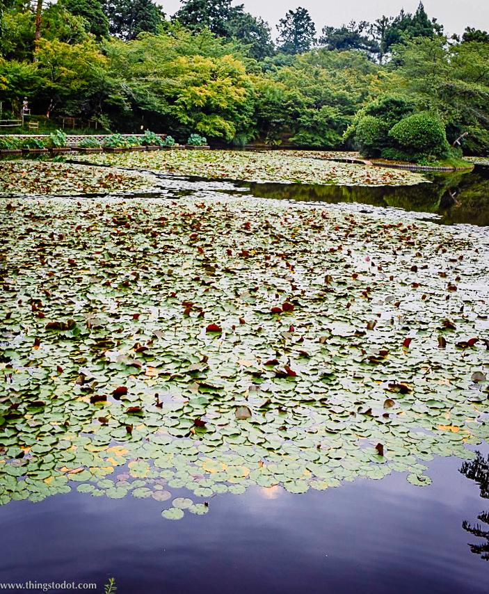 Ryoan-ji, Zen Temple, Kyoyochi Pond, Kyoto, Japan. A UNESCO World Heritage Site. Image©www.thingstodot.com