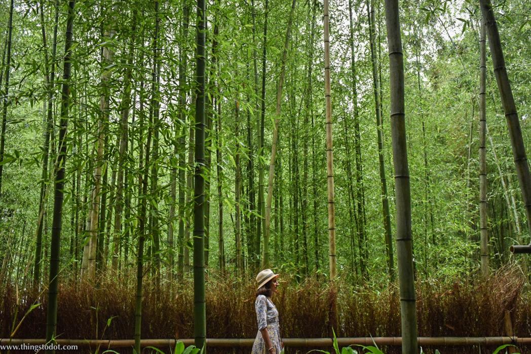 Arashiyama Bamboo Grove, UNESCO World Heritage Site,Kyoto, Japan. Image©www.thingstodot.com.