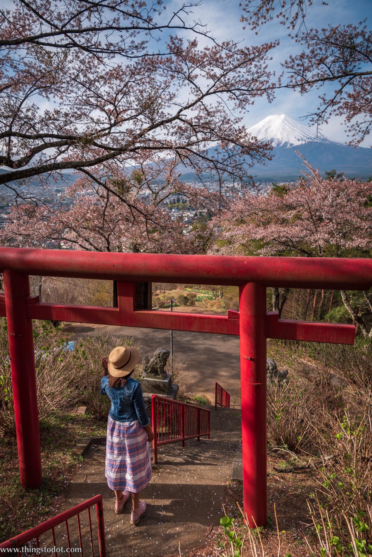 Sakura, cherry blossoms, Japan,Fujimi Kotoku Koeni. Photo: Yuga Kurita. Image©www.thingstodot.com.