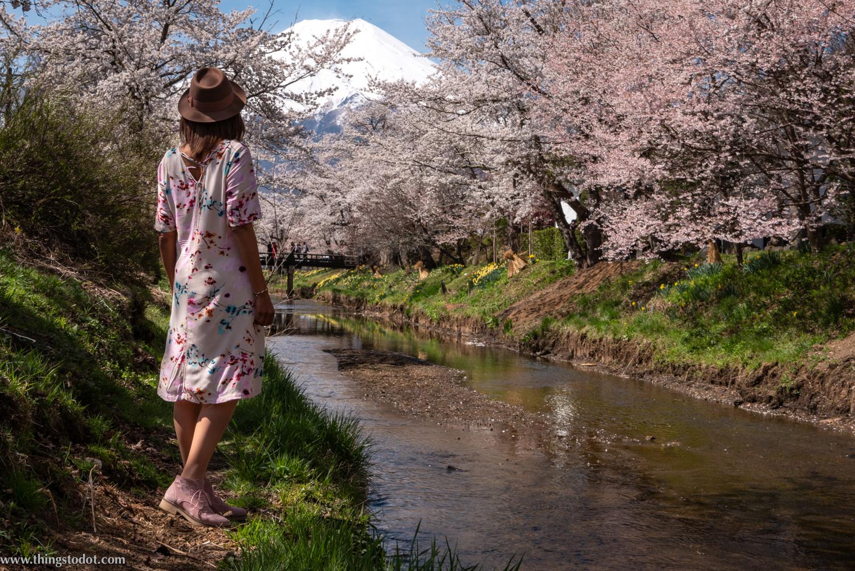 Sakura, cherry blossoms, Japan,Shinnasho River, near Oshino Hakkai. Photo: Yuga Kurita. Image©www.thingstodot.com.