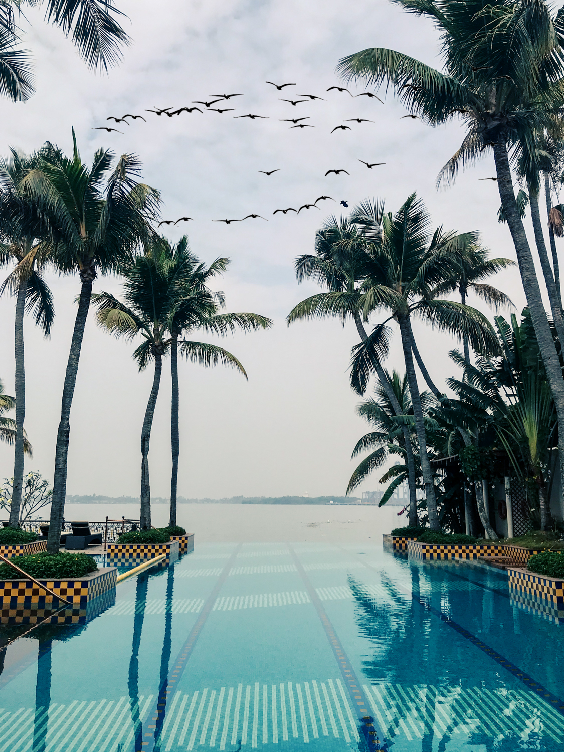 Taj Malabar Resort & Spa, Kochi, Kerala, infinity pool. Photo©www.thingstodot.com.