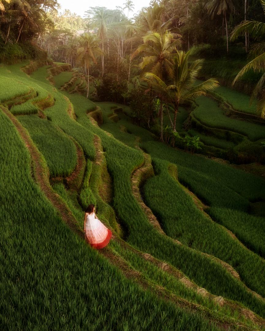 Tegallalang Rice Terraces, Ubud, Bali, Indonesia. Photo: Adi Sumerta.