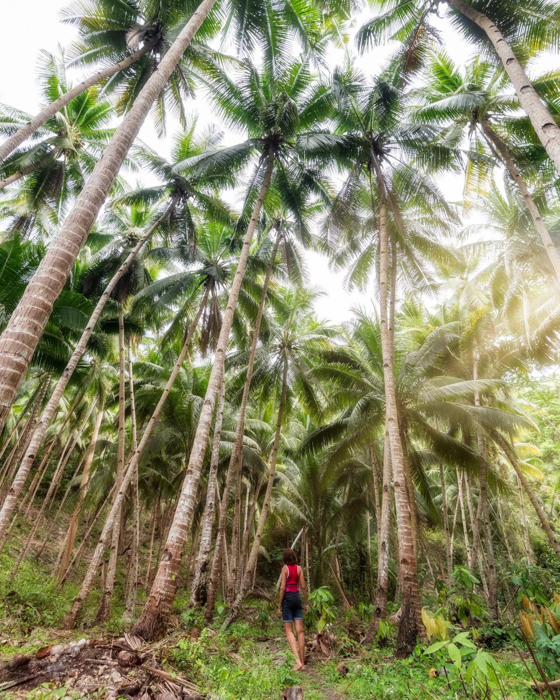 Binalay Hidden Falls, palm trees, Samboan, Cebu, Philippines. Photo: Brad Chilby (https://chilby.com.au), ©www.thingstodot.com.