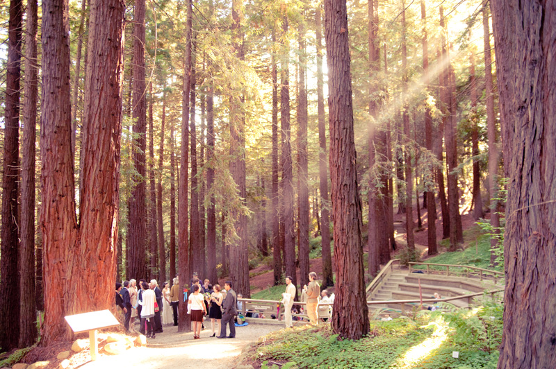 Rays of sunlight shining on wedding ceremony in Mather Redwood grove