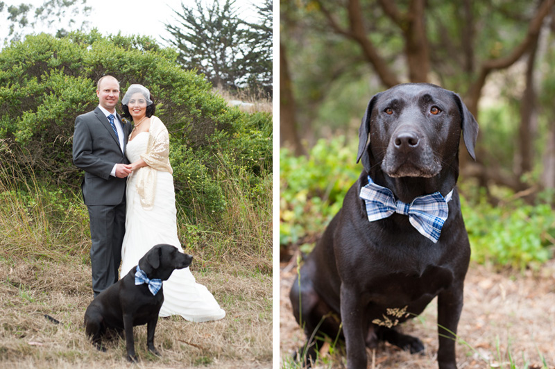 Bride and Groom with their bow-tie wearing dog