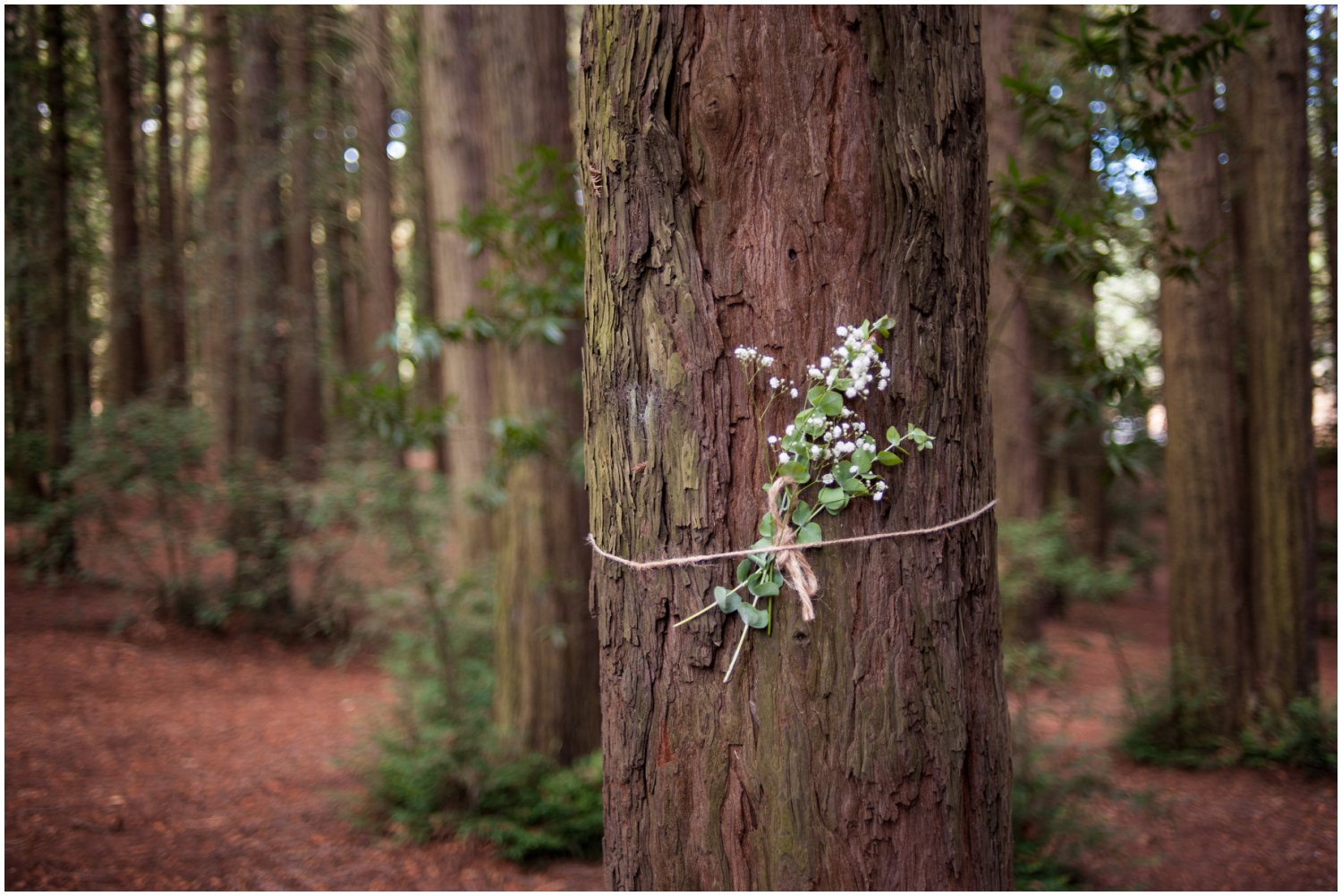 Rustic flower bouquet tied to redwood tree in the Oakland Hills