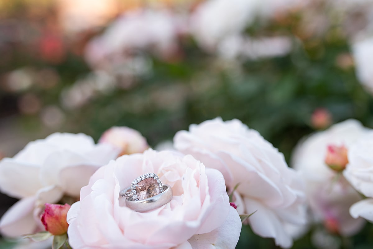 Wedding rings on roses at Heather Farm