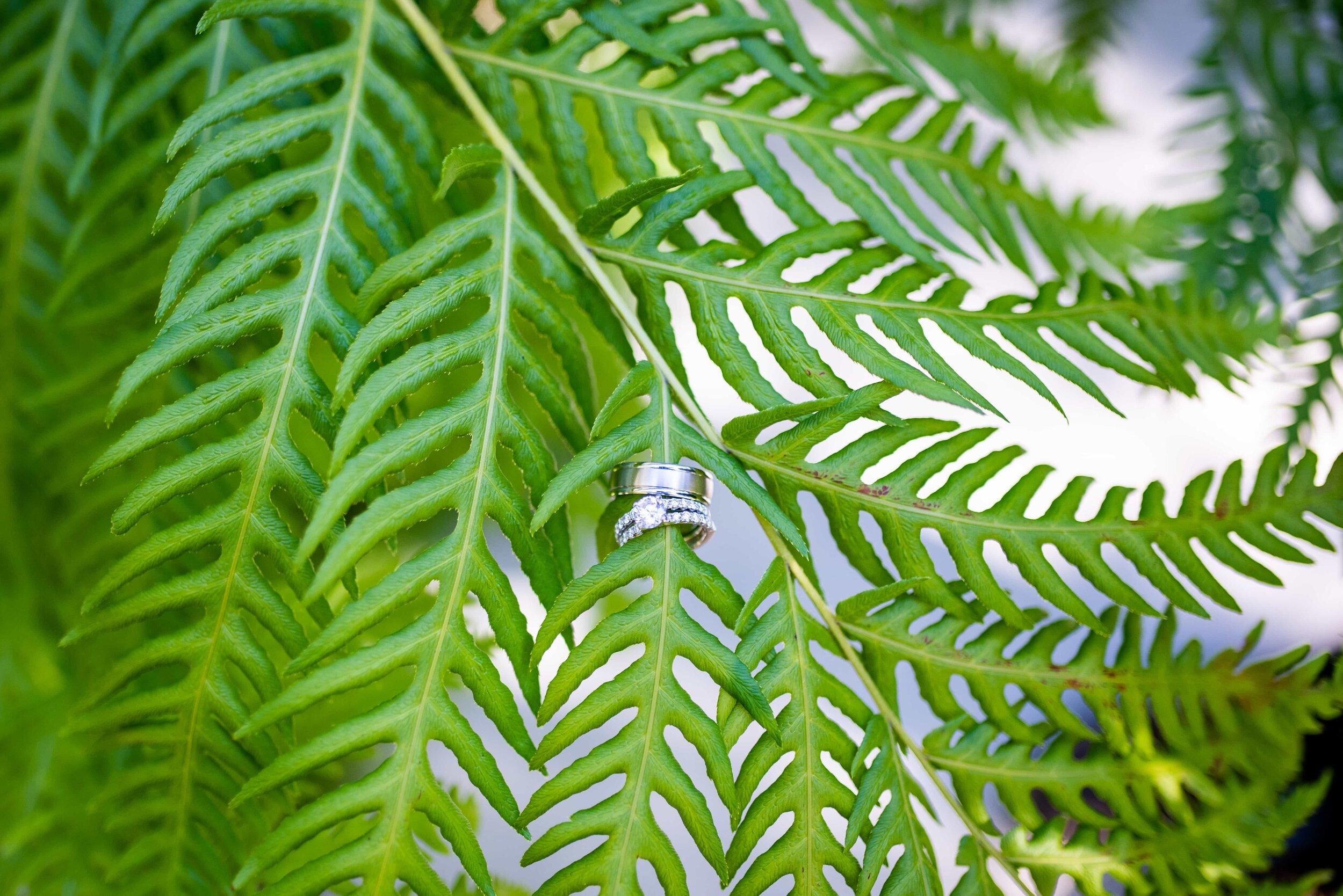 Detail of wedding rings on fern